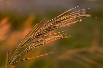 Photograph - Grass by Mary Jo Allen