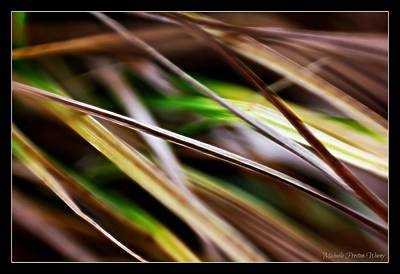 Photograph - Grass by Michaela Preston