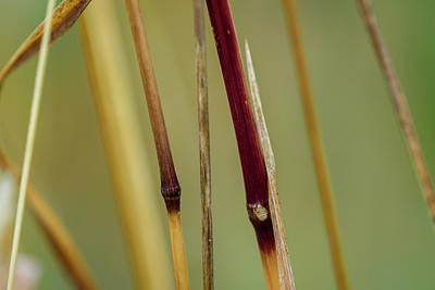 Photograph - Grass Nodes by Robert Potts
