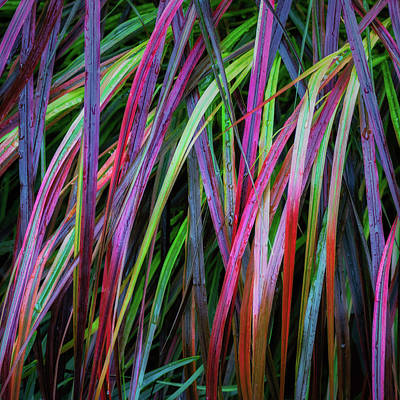 Photograph - Grass Of Color by James Barber