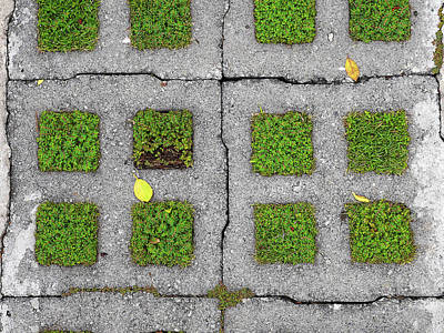 Photograph - Grass Patch Pavement by Herb Paynter