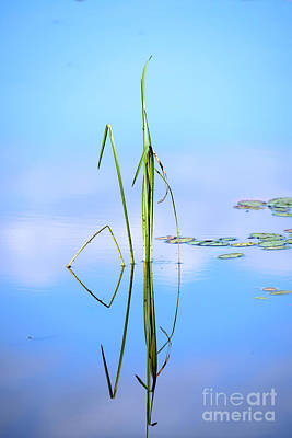 Photograph - Grass Reflection by Sherman Perry