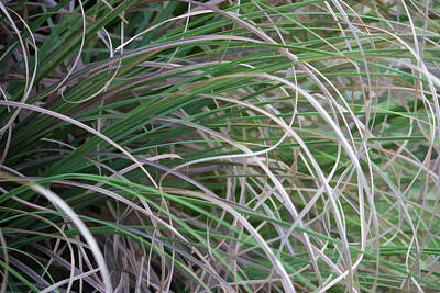 Photograph - Abstract Grass by Roberta Byram