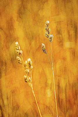 Photograph - Grass Shoots by Stuart Litoff