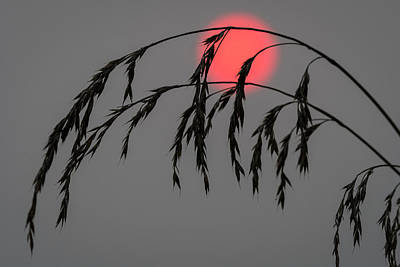 Photograph - Grass Silhouette by Robert Potts