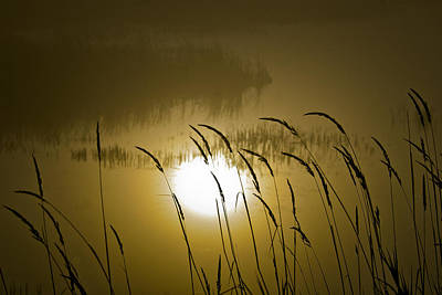 Photograph - Grass Silhouettes by Albert Seger