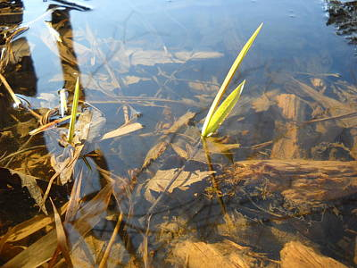 Photograph - Grass Spears In Still Water by Kent Lorentzen