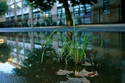 Photograph - Grass Sprout by Brynn Ditsche