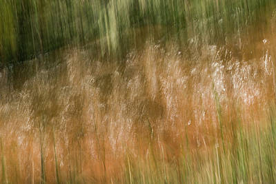 Photograph - Grass Tickles And Trickles by Deborah Hughes