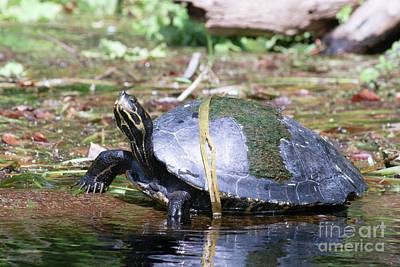 World Forgotten - Grass Turtle by Jack Norton