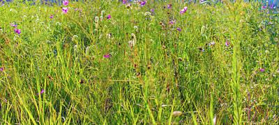 Parkersburg Wv Photograph - Grass World by Jonny D