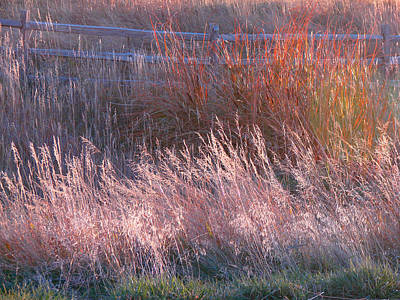 Photograph - Grasses 1 by Diana Douglass