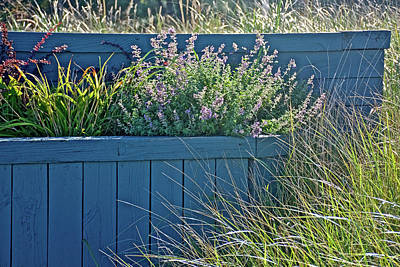 Photograph - Grasses And Flowers By Grand Haven Channel, Michigan  by Ruth Hager
