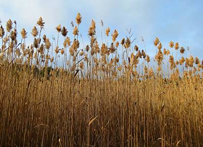 Photograph - Grasses And Sky by MTBobbins Photography