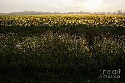 Grasses And Sunflowers 1 Art Print by Ernesto Ruiz