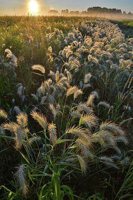 Photograph - Grasses Glowing In Glacial Park At Sunrise by Ray Mathis