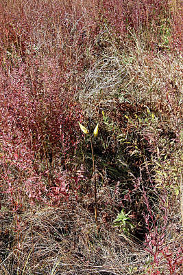 Photograph - Grasses In Fall by Mark Alesse