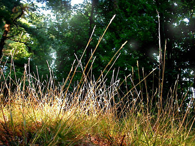 Painting - Grasses In Sunlight by Paul Sachtleben