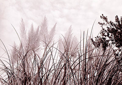 Photograph - Grasses by Katherine Huck Fernie Howard