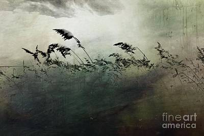 Photograph - Grasses Of Winter by Marcia Lee Jones