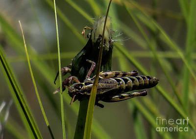 Grasshopper 2 Art Print