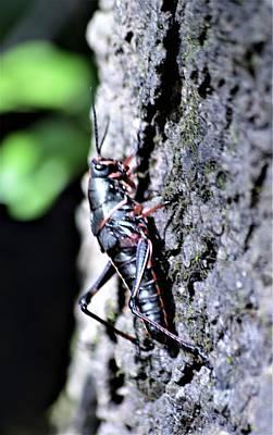 Photograph - Grasshopper And Light by Warren Thompson