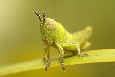 Grasshopper Art Print by Andre Goncalves