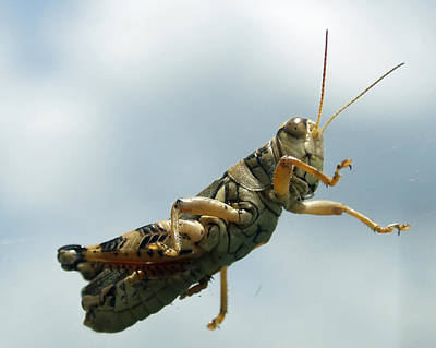 Photograph - Grasshopper IIi by James Granberry