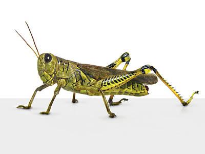Digital Art - Grasshopper by James Larkin