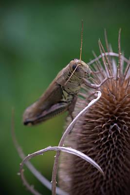 Digital Art - Grasshopper by Patrick Groleau