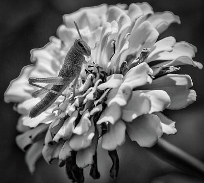 Photograph - Grasshopper by Phyllis Peterson