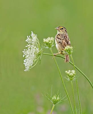 Grasshopper Sparrow Art Print