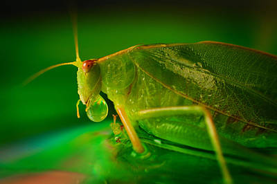 Photograph - Grasshopper by Tim Nichols