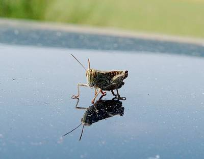 Photograph - Grasshopper by Valerie Ornstein