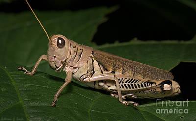 Grasshopper Art Print by Warren Sarle