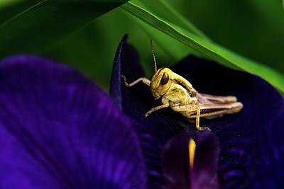 Grasshopper With Attitude Art Print by Douglas Barnett