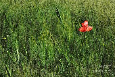 Grassland And Red Poppy Flower 2 Art Print
