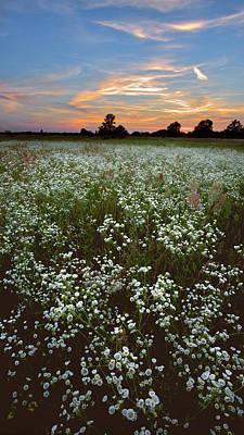 Photograph - Grassland Blossom. Lebedivka, 2018. by Andriy Maykovskyi