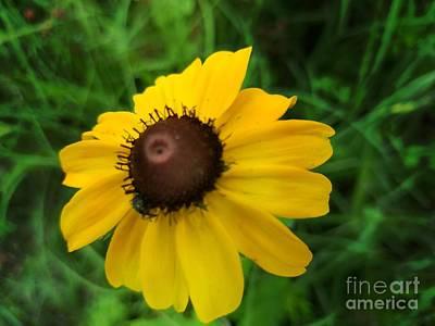 Photograph - Grassland Gold by Maria Urso