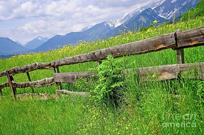Photograph - Grassland In Tyrol by Elzbieta Fazel