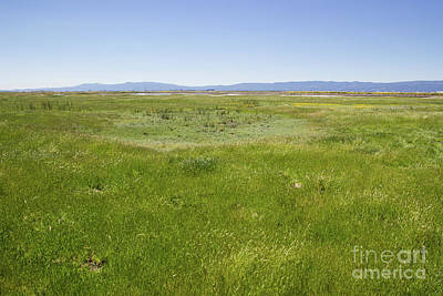 Photograph - Grasslands Around Vernal Pool by Suzanne Luft