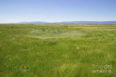 Photograph - Grasslands Around Vernal Pool by Suzanne Luft