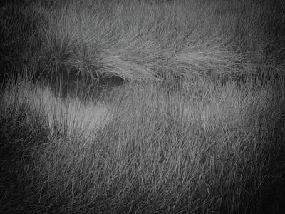 Photograph - Grassy Dream by Lynne Mitchell