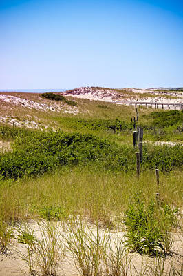Photograph - Grassy Dunes by Colleen Kammerer