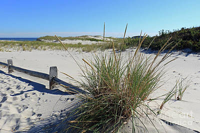 Photograph - Grassy Dunes II by Mary Haber