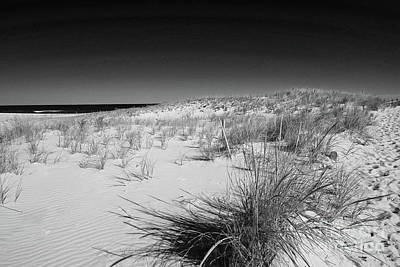 Photograph - Grassy Dunes In Bw by Mary Haber