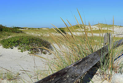 Photograph - Grassy Dunes by Mary Haber