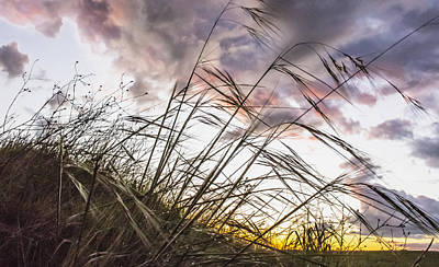 Jimerson Photograph - Grassy Knoll by Wes Jimerson