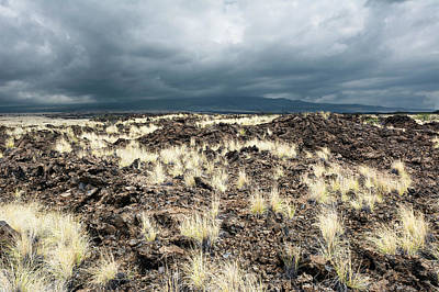 Photograph - Grassy Lava Field by Joe Belanger