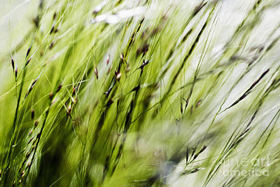 Photograph - Grassy Pattern by Ray Laskowitz - Printscapes